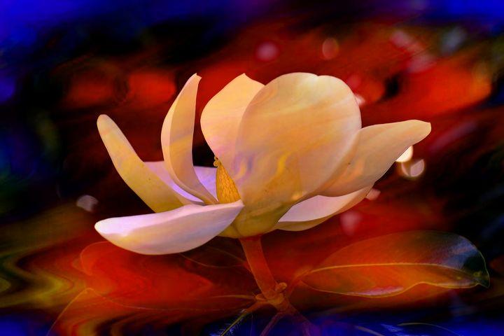 Flaming Magnolia - The1Essence Presentations