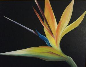Bird of Paradise - Robert Wood Fine Art