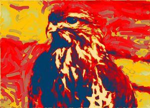 Gouche's Falcon