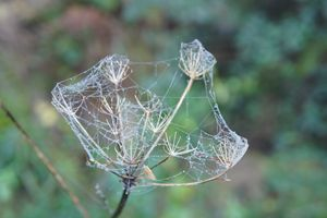 Natures Diamonds