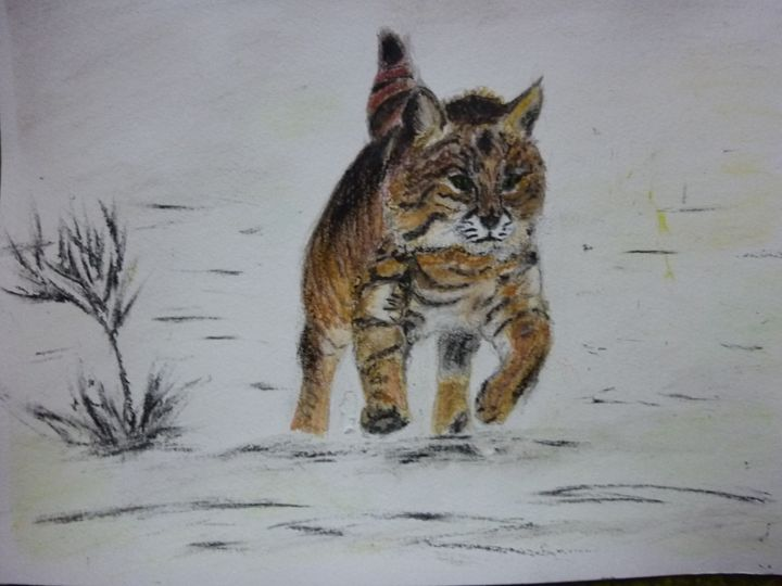 Le lynx - Manon