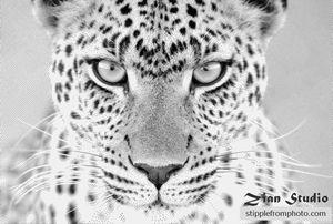 Stipple drawing of leopard