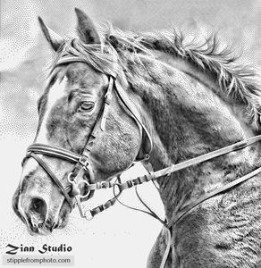 Stipple drawing of horse