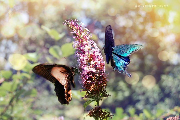 Butterflies - OrionArt