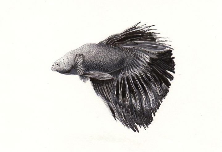 Betta fish/ Siamese fighting fish - OrionArt