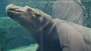 Our Hippo Fiona