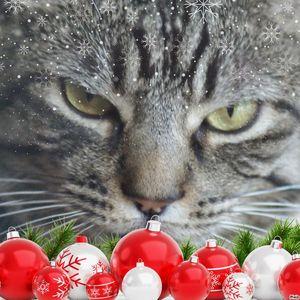 Merry Christmas Meow