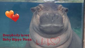 Love Baby Fiona