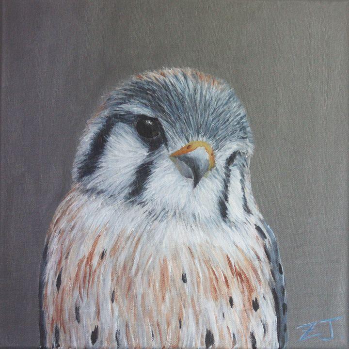 Bird Portrait - American Kestrel - Jing Zhu