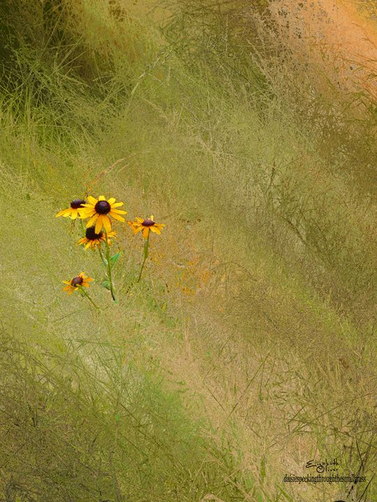 daisiespeekingthroughthesmallgrass - Elizabeth Oliver muddled photography