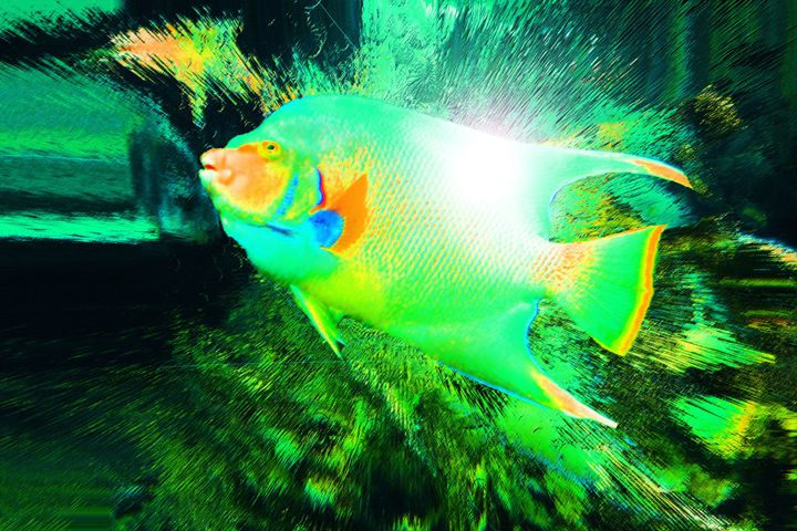 Fishy - Elizabeth Oliver muddled photography