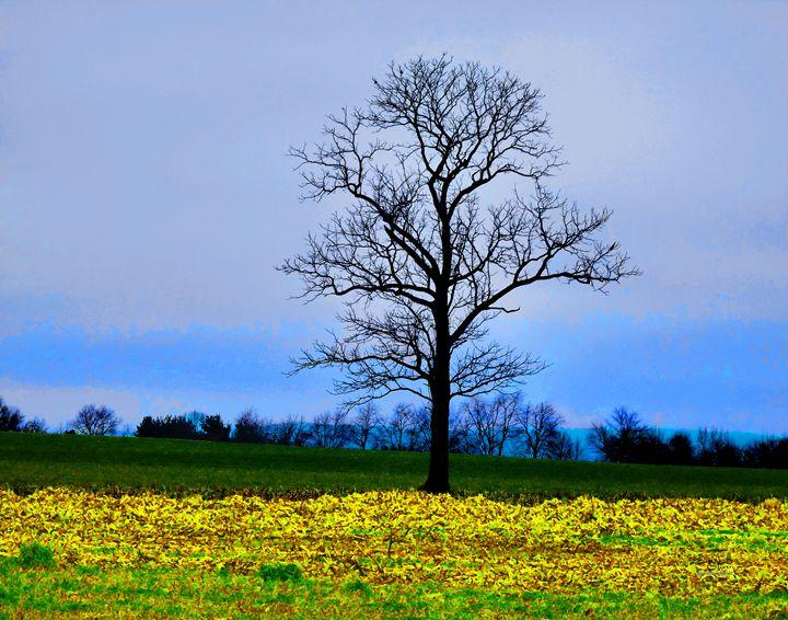 alonetreeinanohiocornfield - Elizabeth Oliver muddled photography