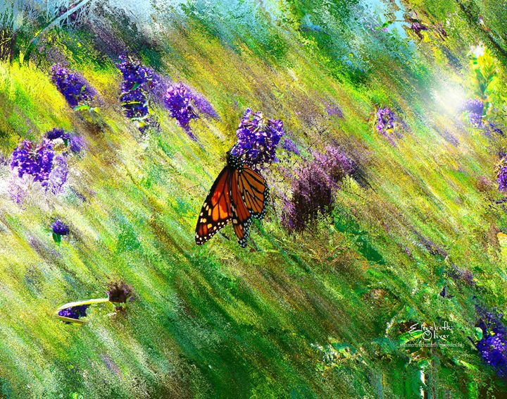 summertimebutterflyinwoosterohio - Elizabeth Oliver muddled photography
