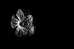 Flower inside dark