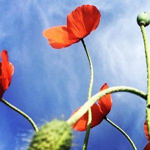 Soft red flower