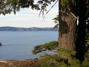 Crater Lake under a tree