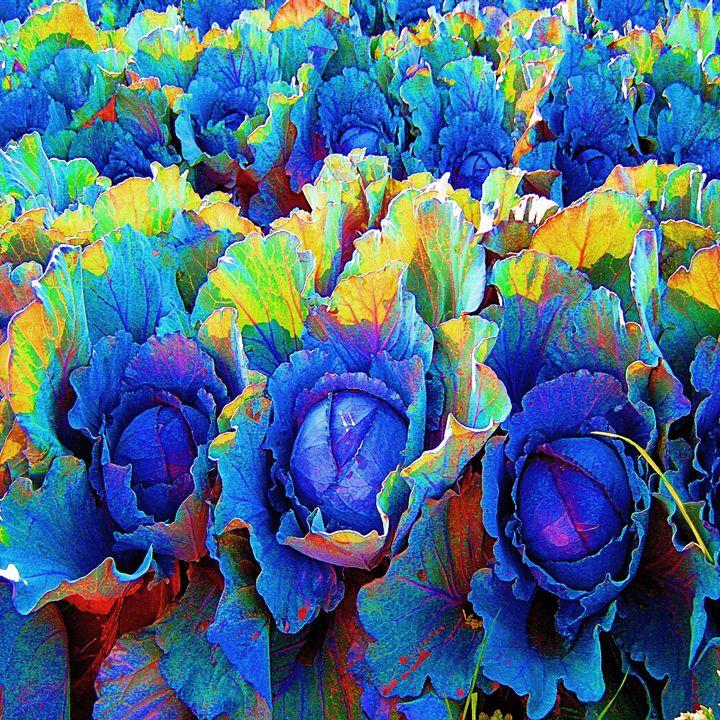 Yuma Cabbages #1 - Pamela Carvajal Drapala, Artist
