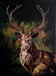 Majestic Deer Stag