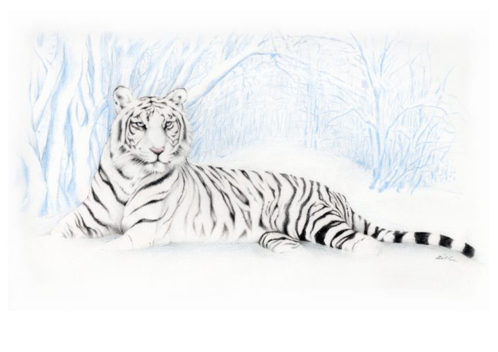 Snow Tiger - Dave Field