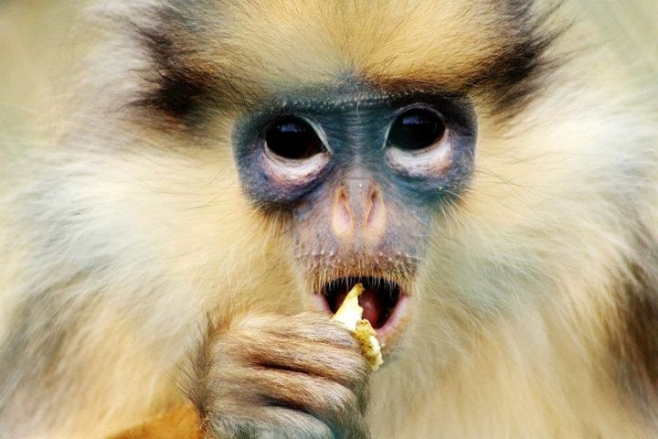monkey - Laurahayles photography
