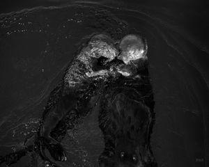Sea Otters II BW