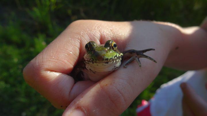 Frogger - WinterFlowerArt