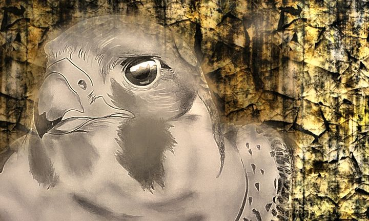 Hunter Falcon - Amberlynn