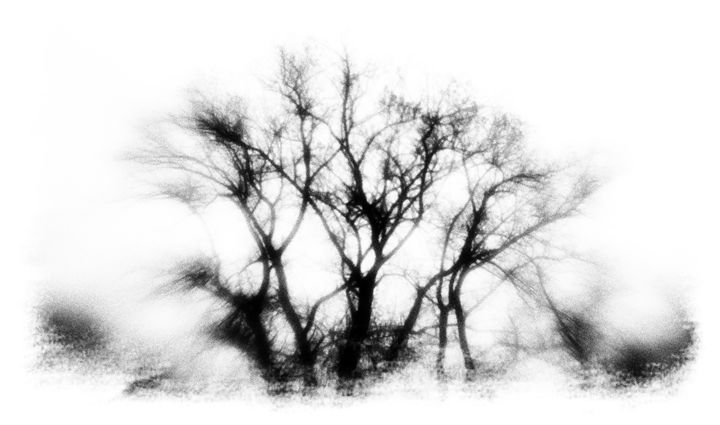 mysterious trees - david ridley