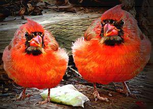 """Beyond Red Cardinals"" - Bigan Fanli"