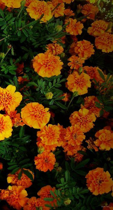 Marigolds 2051-Right - Bigan Fanli