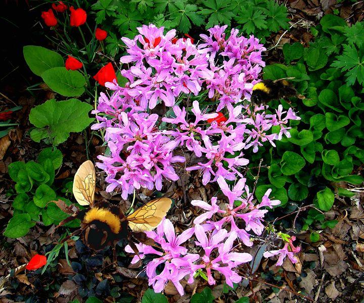 Bumble Bees and Flowering Tree - Bigan Fanli