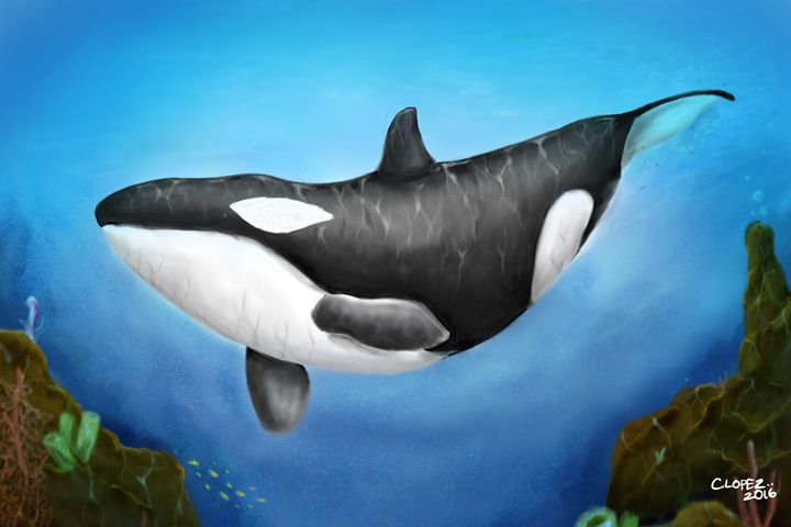 Killer Whale - Chris Lopez Art