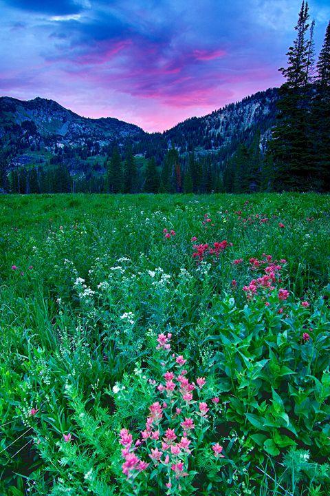 Purple Sunrise - Roy Breslawski Nature Photography