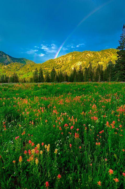 Wildflower Rainbow - Roy Breslawski Nature Photography