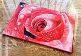 Closeup of a wet Rose flower