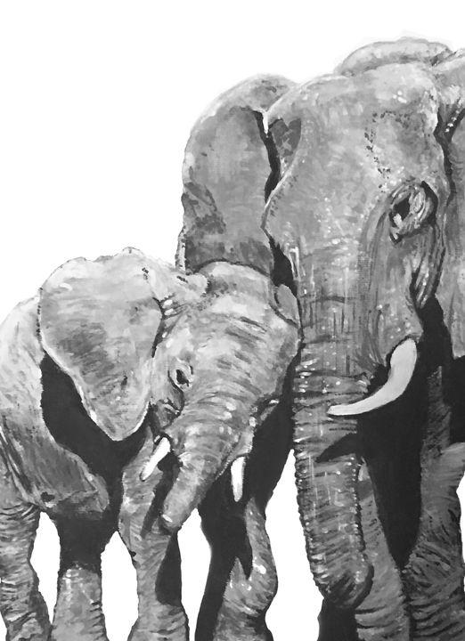 Elephants in black and white - Ryan Ireland