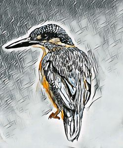Common Kingfisher - Ryan Ireland