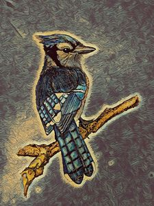 Blue Jay - Ryan Ireland