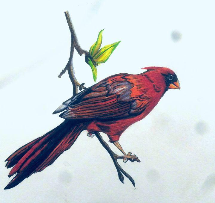 Cardinal - Ryan Ireland