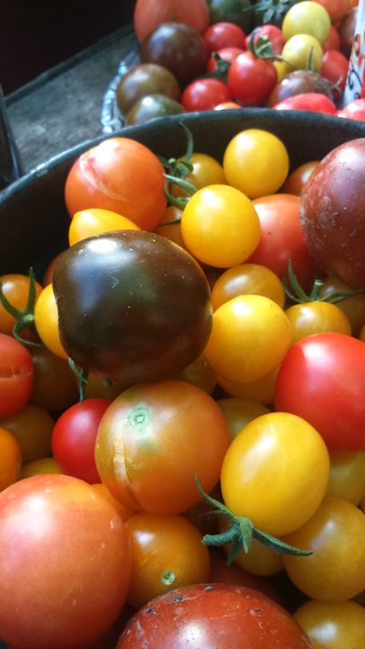 Succulent tomatoes - Nive