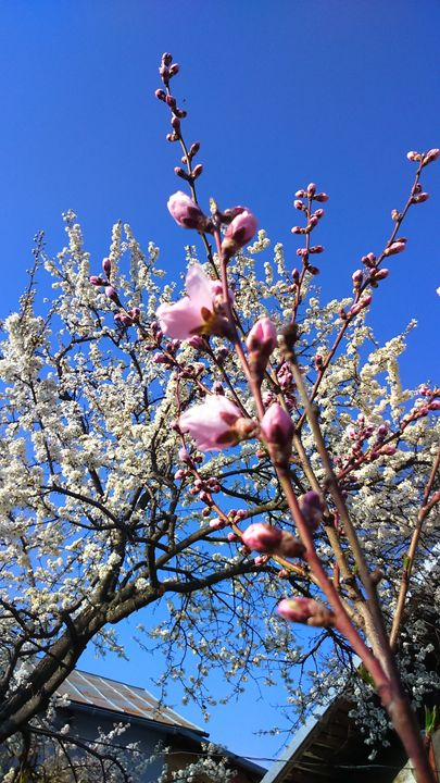 Springtastic - Nive