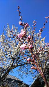 Springtastic
