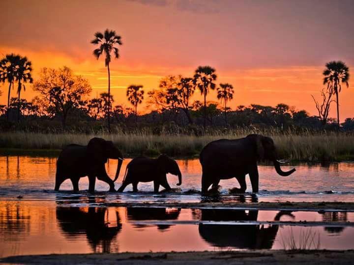 Maasai Mara Sunset - Stramaxstore