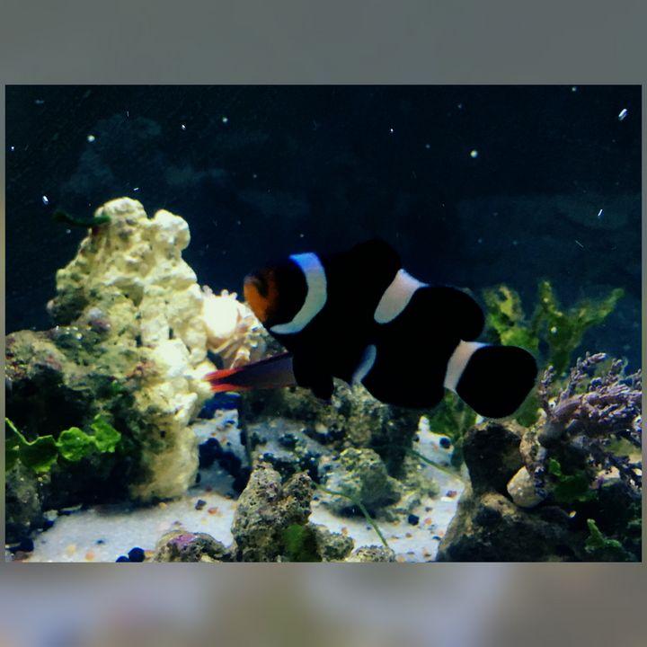 Bitee - Fish Dont Talk