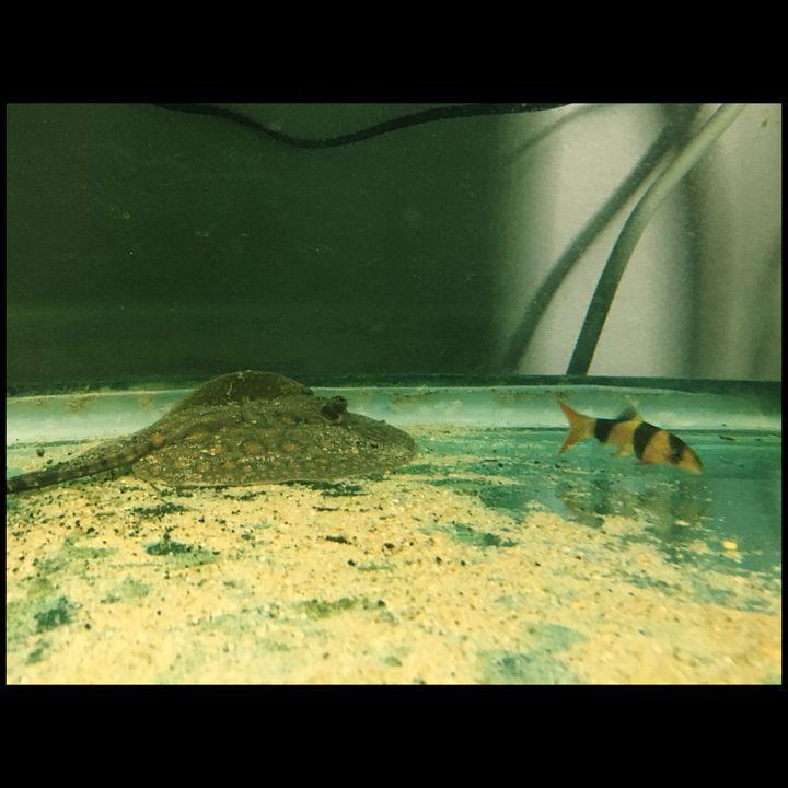 Monster Fish Tag Team - Fish Dont Talk