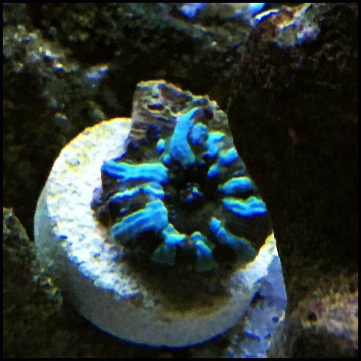 Mushroom Coral - Fish Dont Talk
