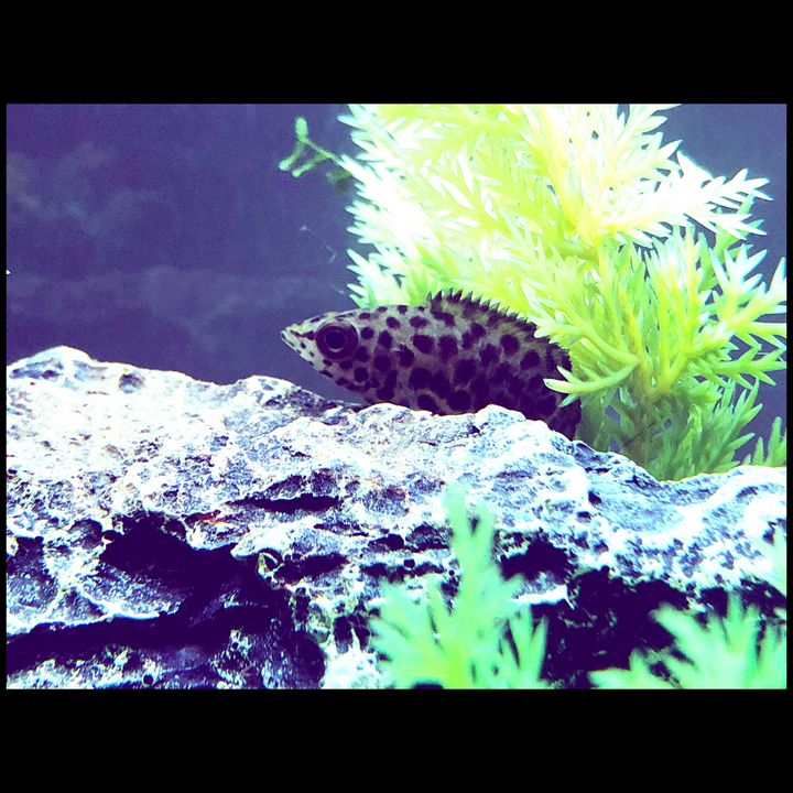 African Bush Fish/Leopard Fish - Fish Dont Talk