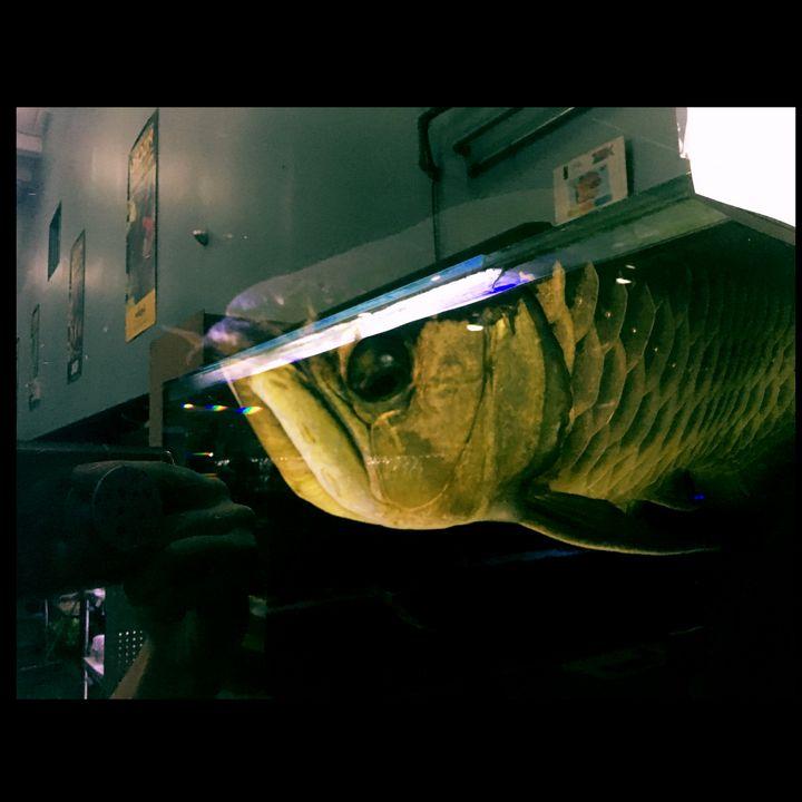 Dragon of the Sea - Fish Dont Talk
