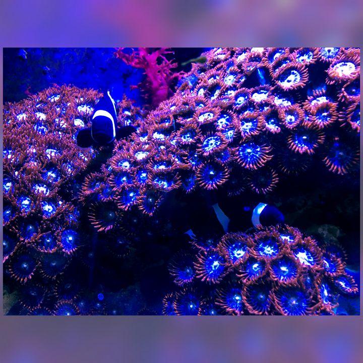 Blue Zoas - Fish Dont Talk