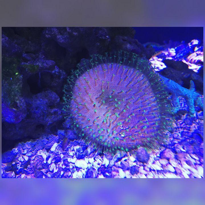 Soft Coral - Fish Dont Talk
